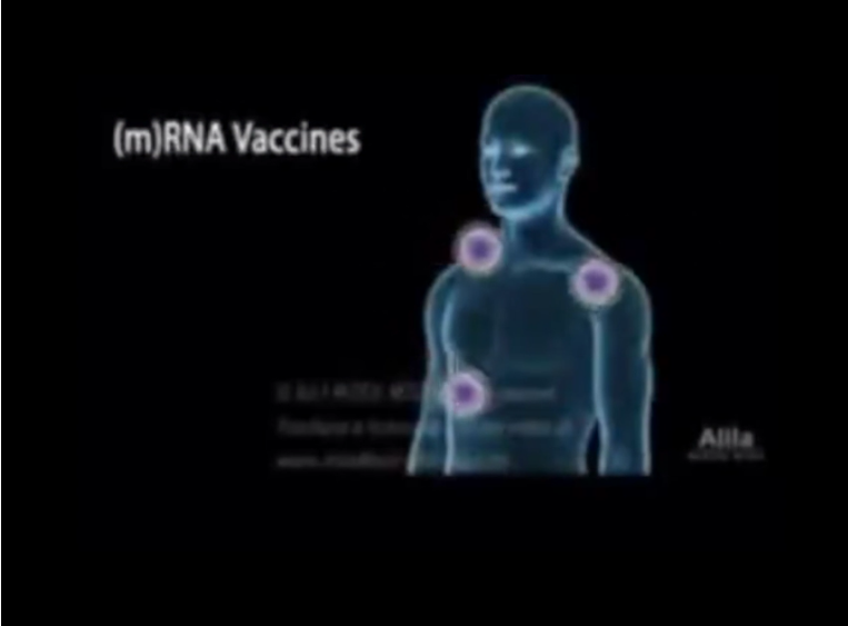 Visual Display of What the mRNA Vaccine Does To Your Body's Cells… Image-1345